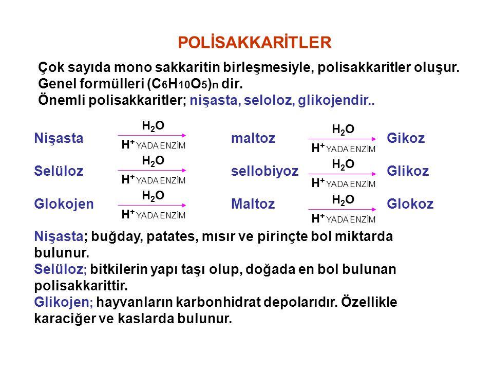 POLİSAKKARİTLER Çok sayıda mono sakkaritin birleşmesiyle, polisakkaritler oluşur. Genel formülleri (C 6 H 10 O 5 ) n dir. Önemli polisakkaritler; nişa