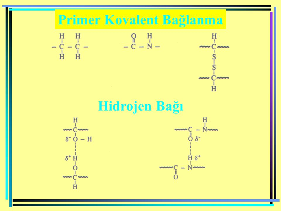 Primer Kovalent Bağlanma Hidrojen Bağı