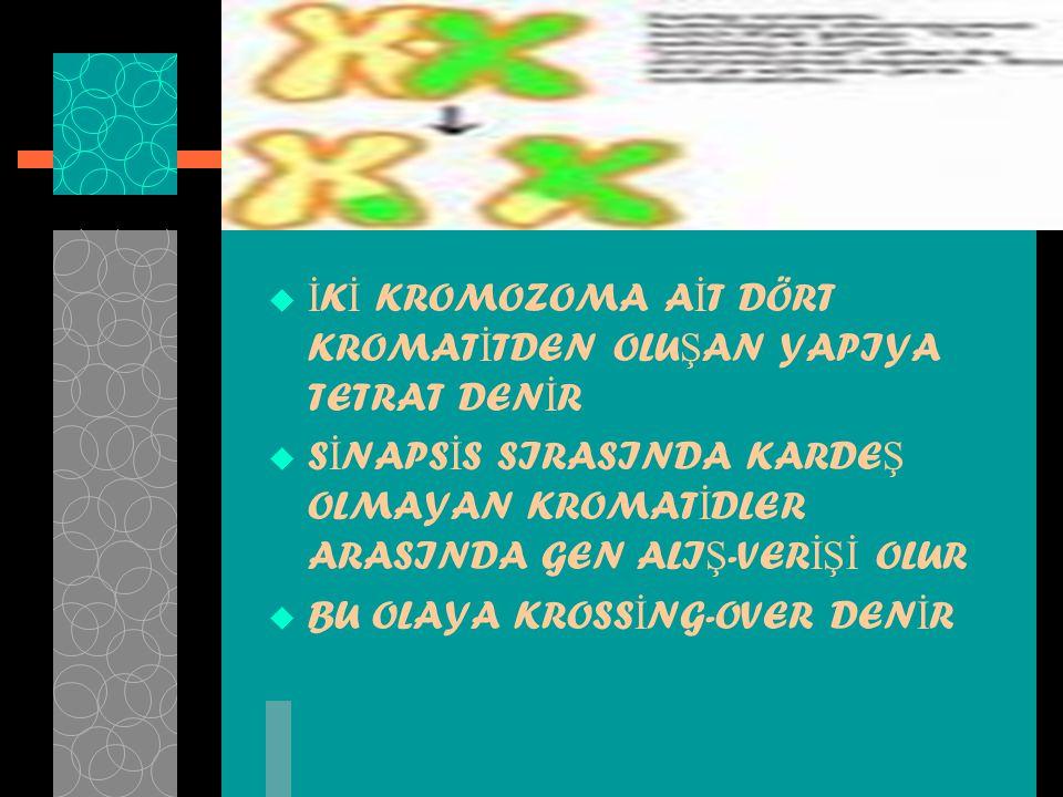 KROSS İ NG-OVER
