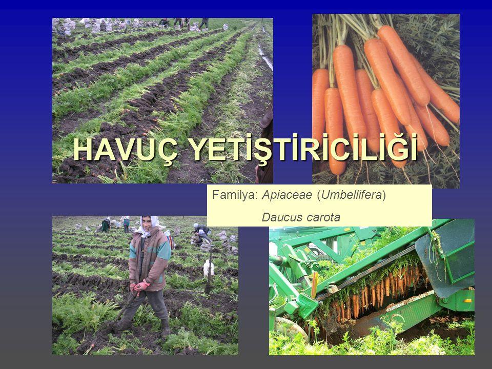 HAVUÇ YETİŞTİRİCİLİĞİ Familya: Apiaceae (Umbellifera) Daucus carota