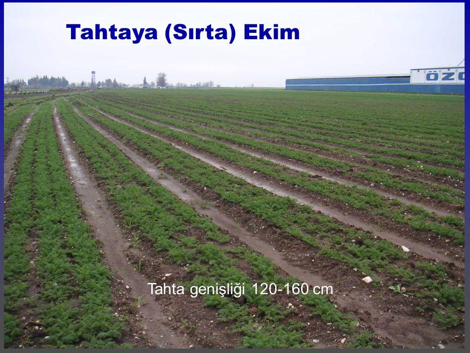 Tahtaya (Sırta) Ekim Tahta genişliği 120-160 cm