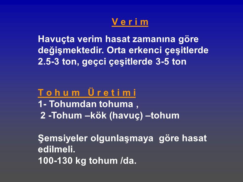 V e r i m Havuçta verim hasat zamanına göre değişmektedir. Orta erkenci çeşitlerde 2.5-3 ton, geçci çeşitlerde 3-5 ton T o h u m Ü r e t i m i 1- Tohu