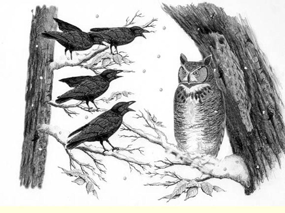 1960'larda, Konrad Lorenz, Aynı kuluçkadan çıkan kuşlar arasında yaşanan ve diğer kuşların, aralarındaki en zayıf kuşu yiyecek ve sudan uzak tutarak dışlaması, iyice güçsüz bir hale getirmesi ve en sonunda da fiziksel saldırılarla öldürerek grubun dışına atması durumu Mobbing