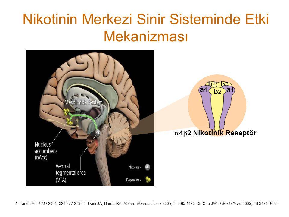 Nikotinin Merkezi Sinir Sisteminde Etki Mekanizması a4a4 b2b2 b2b2 b2b2 a4a4  4  2 Nikotinik Reseptör 1. Jarvis MJ. BMJ 2004; 328:277-279. 2. Dani J