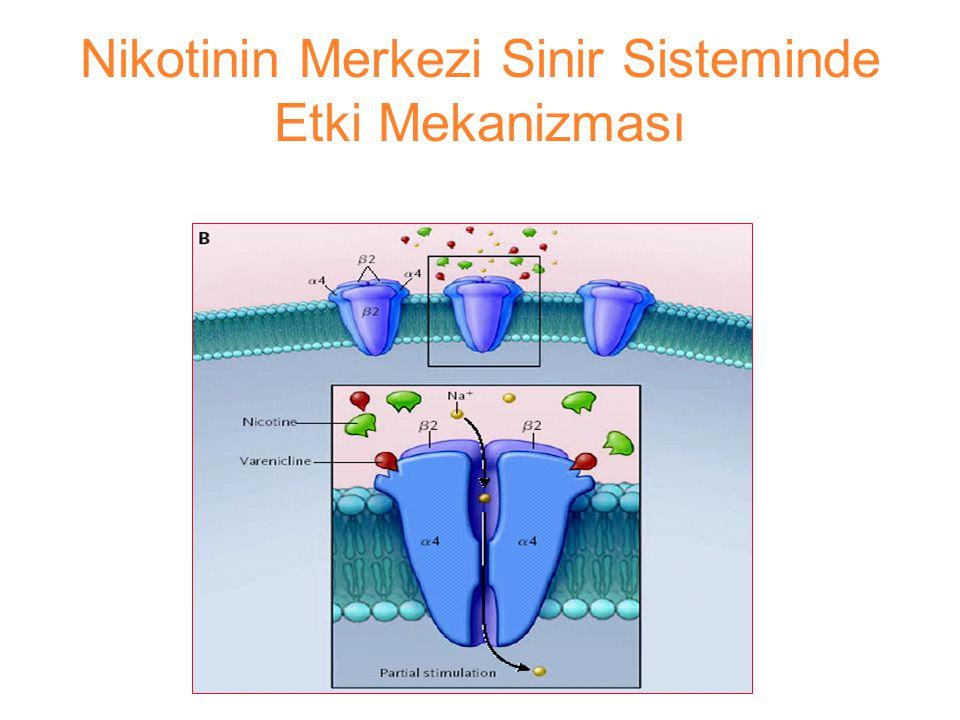 Nikotinin Merkezi Sinir Sisteminde Etki Mekanizması