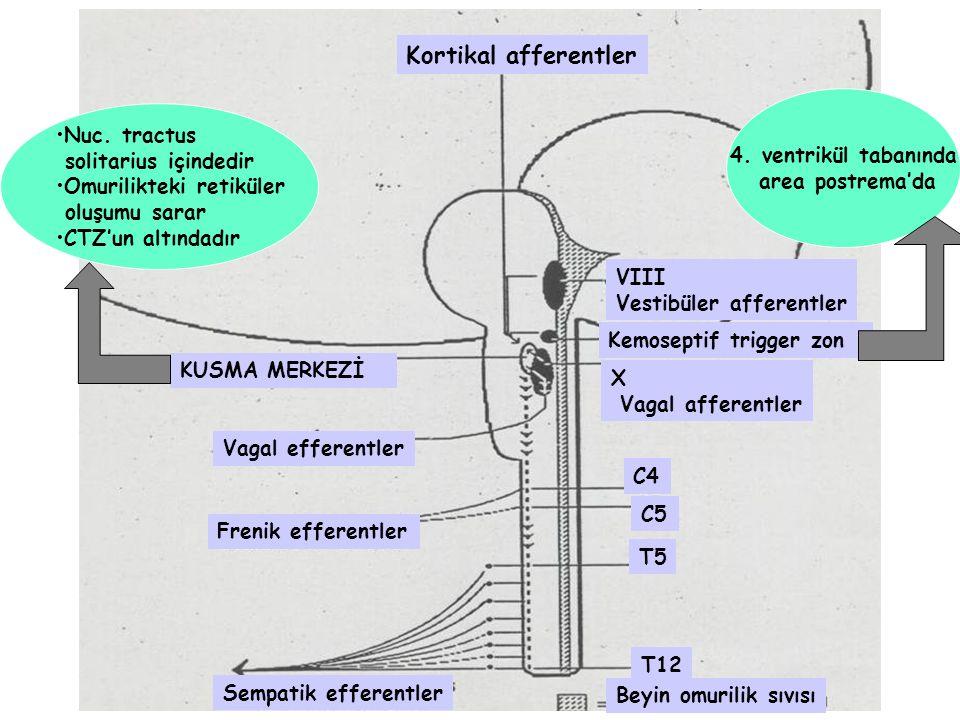 KUSMA MERKEZİ Kortikal afferentler VIII Vestibüler afferentler Kemoseptif trigger zon X Vagal afferentler Vagal efferentler Frenik efferentler C4 C5 T5 T12 Beyin omurilik sıvısı Sempatik efferentler 4.
