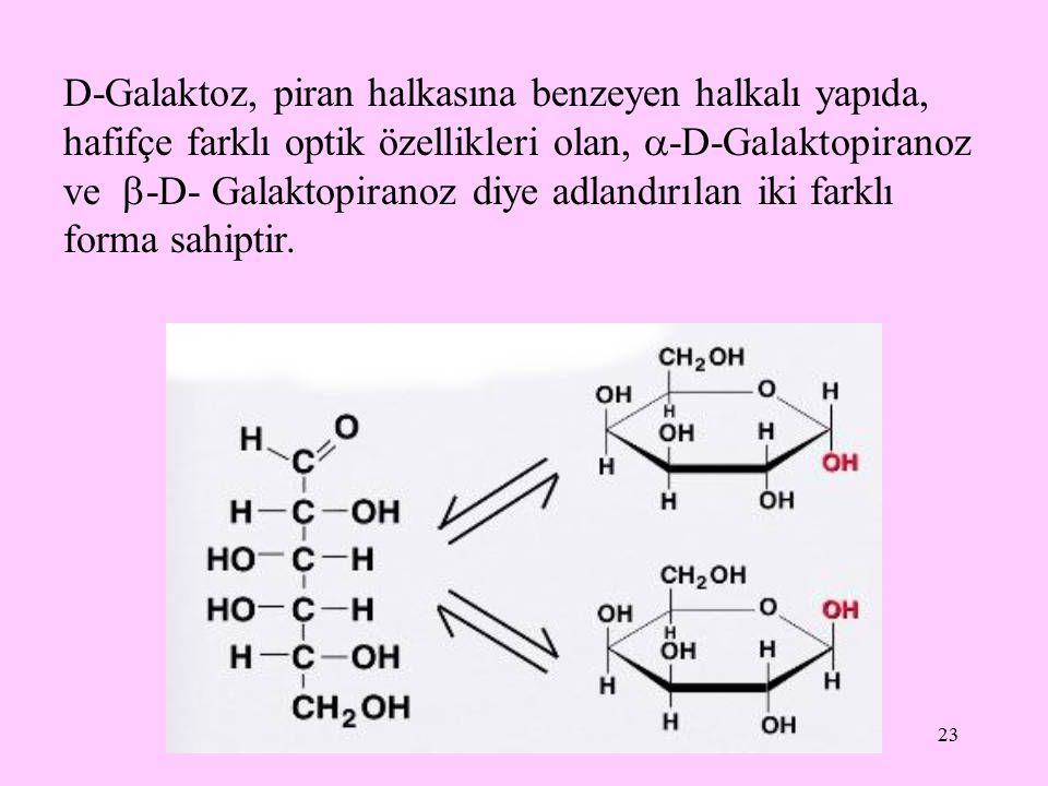 23 D-Galaktoz, piran halkasına benzeyen halkalı yapıda, hafifçe farklı optik özellikleri olan,  -D-Galaktopiranoz ve  -D- Galaktopiranoz diye adland