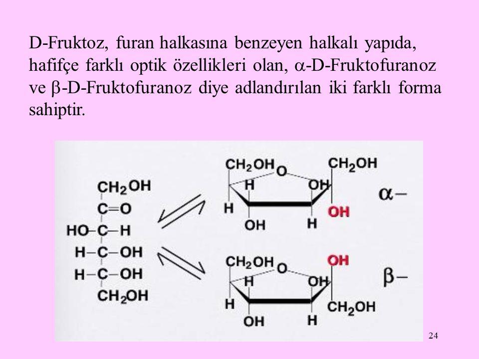 24 D-Fruktoz, furan halkasına benzeyen halkalı yapıda, hafifçe farklı optik özellikleri olan,  -D-Fruktofuranoz ve  -D-Fruktofuranoz diye adlandırıl