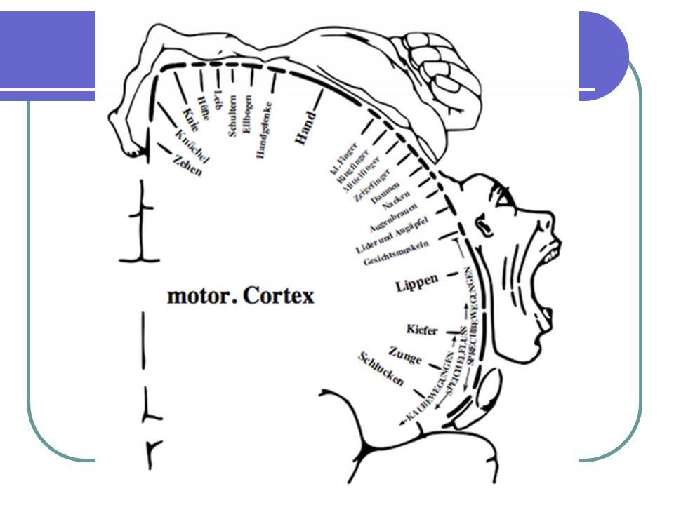 HENRİNİN BELLEKTEN ÇAĞIRMA TEORİSİ Motor yetenek genel olmaktan çok özeldir.