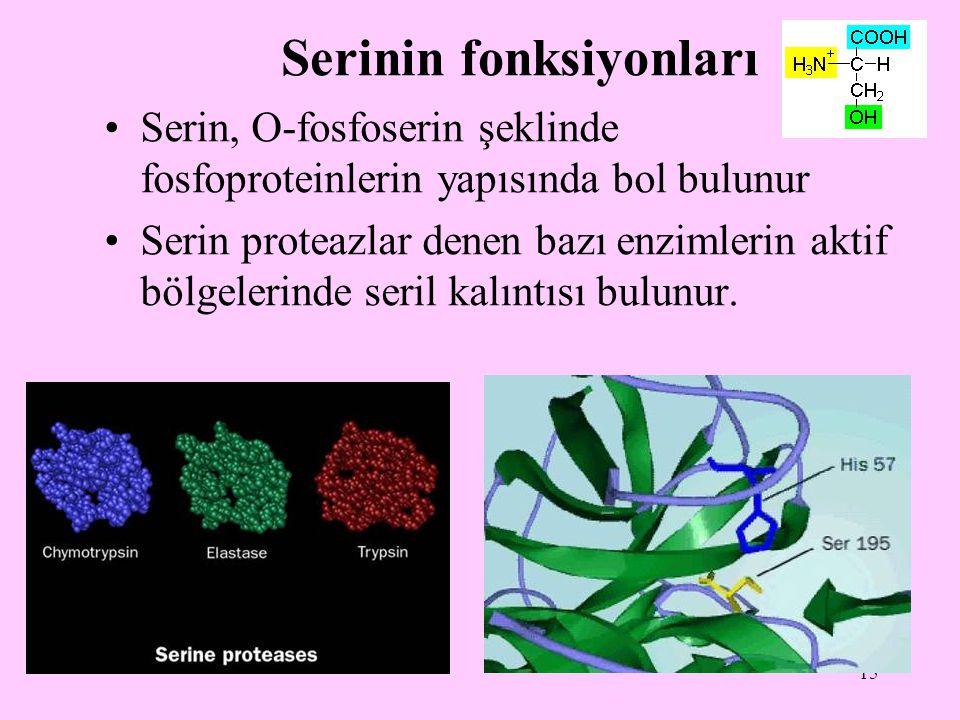 15 Serinin fonksiyonları Serin, O-fosfoserin şeklinde fosfoproteinlerin yapısında bol bulunur Serin proteazlar denen bazı enzimlerin aktif bölgelerind