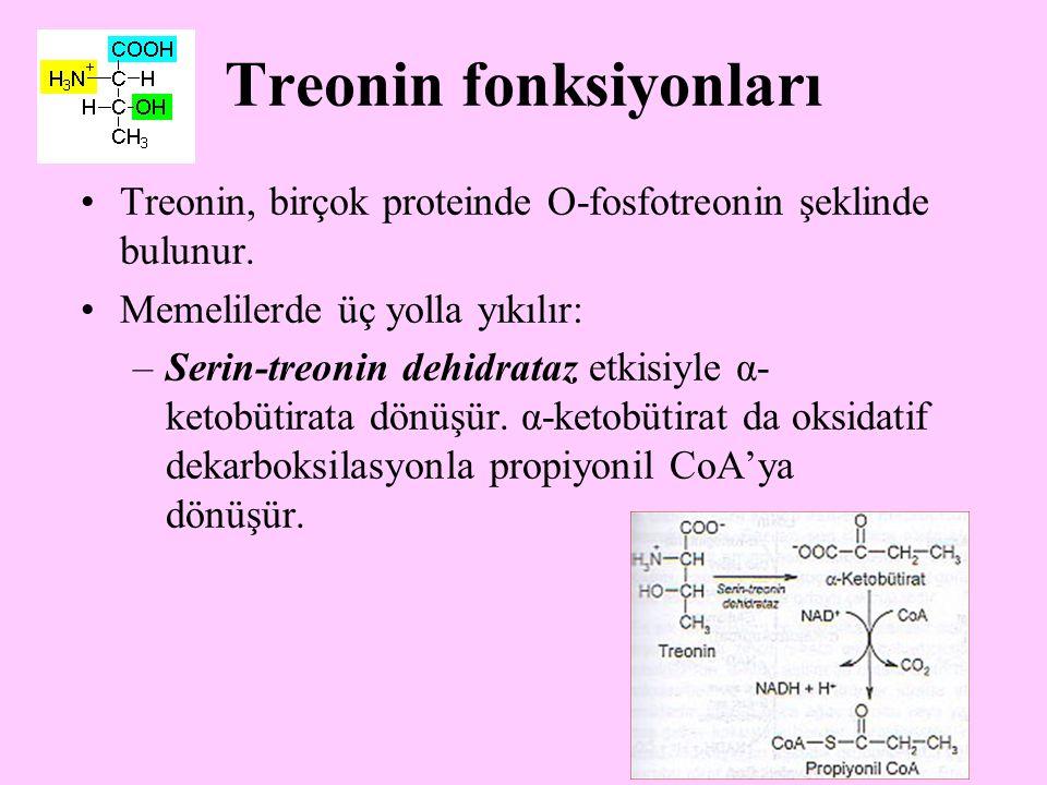 20 Treonin fonksiyonları Treonin, birçok proteinde O-fosfotreonin şeklinde bulunur. Memelilerde üç yolla yıkılır: –Serin-treonin dehidrataz etkisiyle