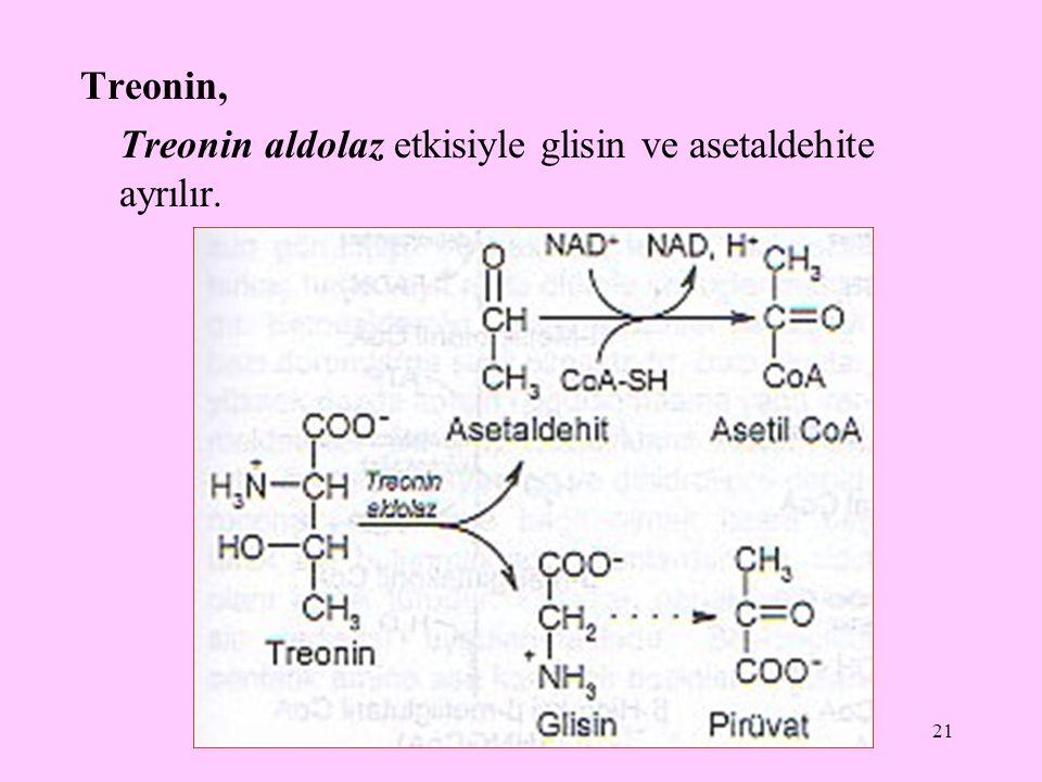 21 Treonin, Treonin aldolaz etkisiyle glisin ve asetaldehite ayrılır.