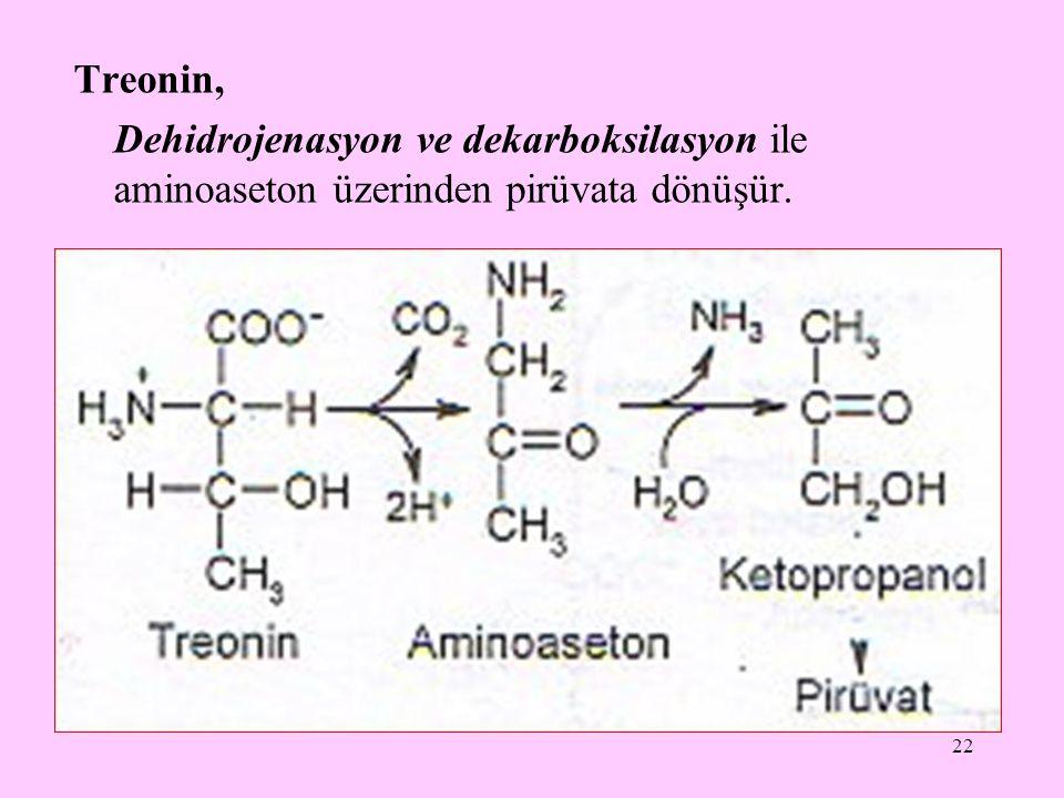 22 Treonin, Dehidrojenasyon ve dekarboksilasyon ile aminoaseton üzerinden pirüvata dönüşür.