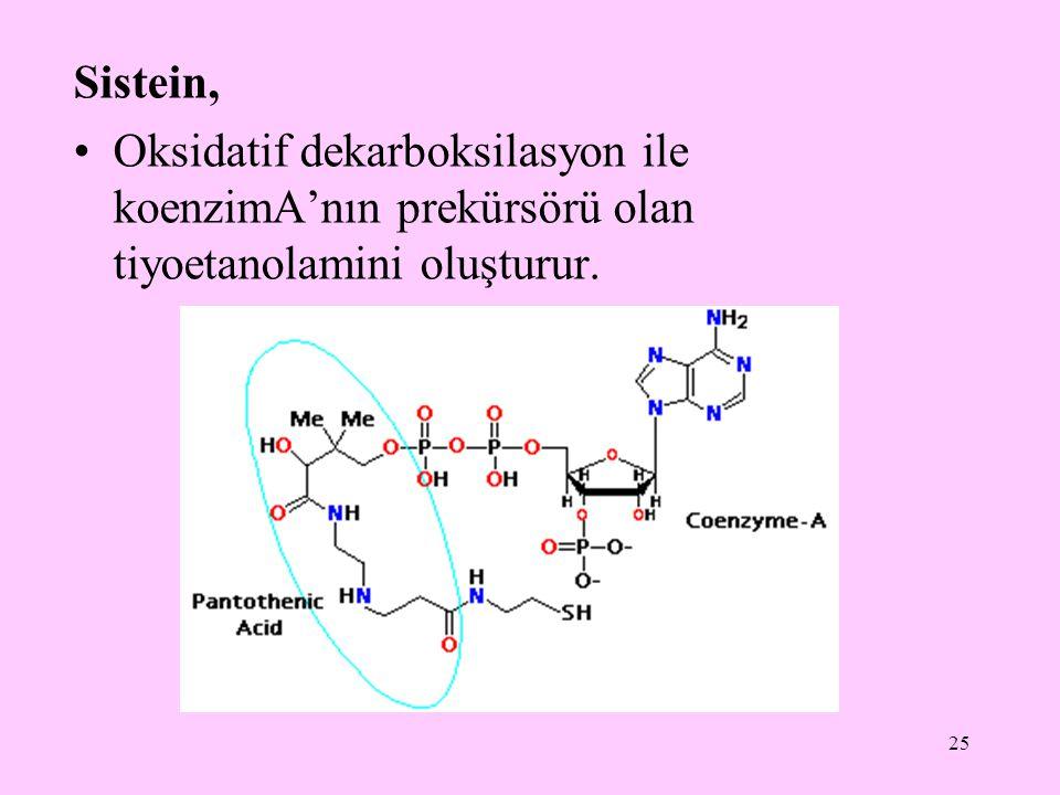 25 Sistein, Oksidatif dekarboksilasyon ile koenzimA'nın prekürsörü olan tiyoetanolamini oluşturur.