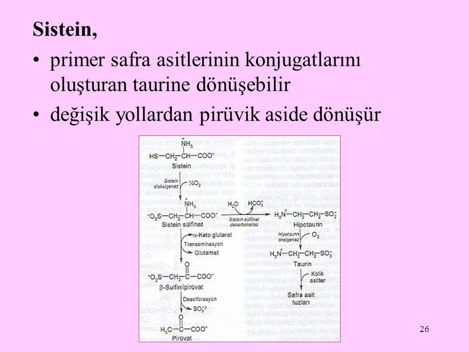 26 Sistein, primer safra asitlerinin konjugatlarını oluşturan taurine dönüşebilir değişik yollardan pirüvik aside dönüşür