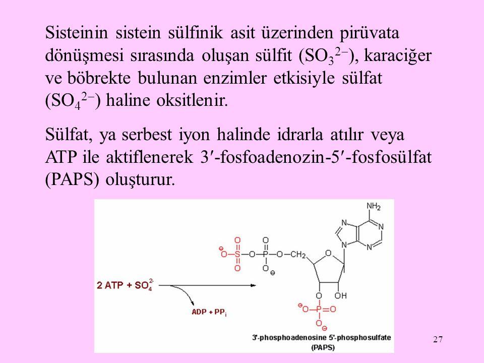 27 Sisteinin sistein sülfinik asit üzerinden pirüvata dönüşmesi sırasında oluşan sülfit (SO 3 2  ), karaciğer ve böbrekte bulunan enzimler etkisiyle