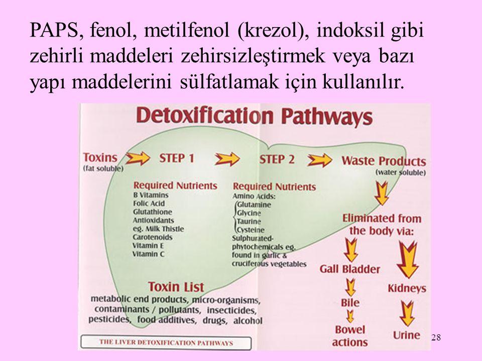 28 PAPS, fenol, metilfenol (krezol), indoksil gibi zehirli maddeleri zehirsizleştirmek veya bazı yapı maddelerini sülfatlamak için kullanılır.