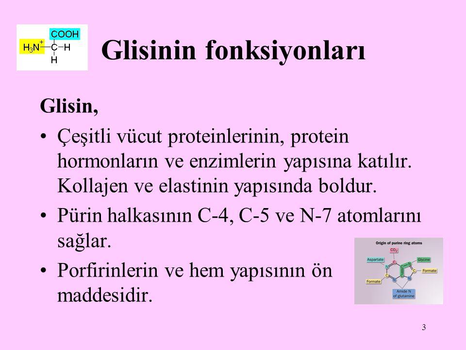 3 Glisinin fonksiyonları Glisin, Çeşitli vücut proteinlerinin, protein hormonların ve enzimlerin yapısına katılır. Kollajen ve elastinin yapısında bol