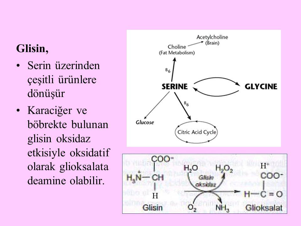 5 Glisin, Serin üzerinden çeşitli ürünlere dönüşür Karaciğer ve böbrekte bulunan glisin oksidaz etkisiyle oksidatif olarak glioksalata deamine olabili