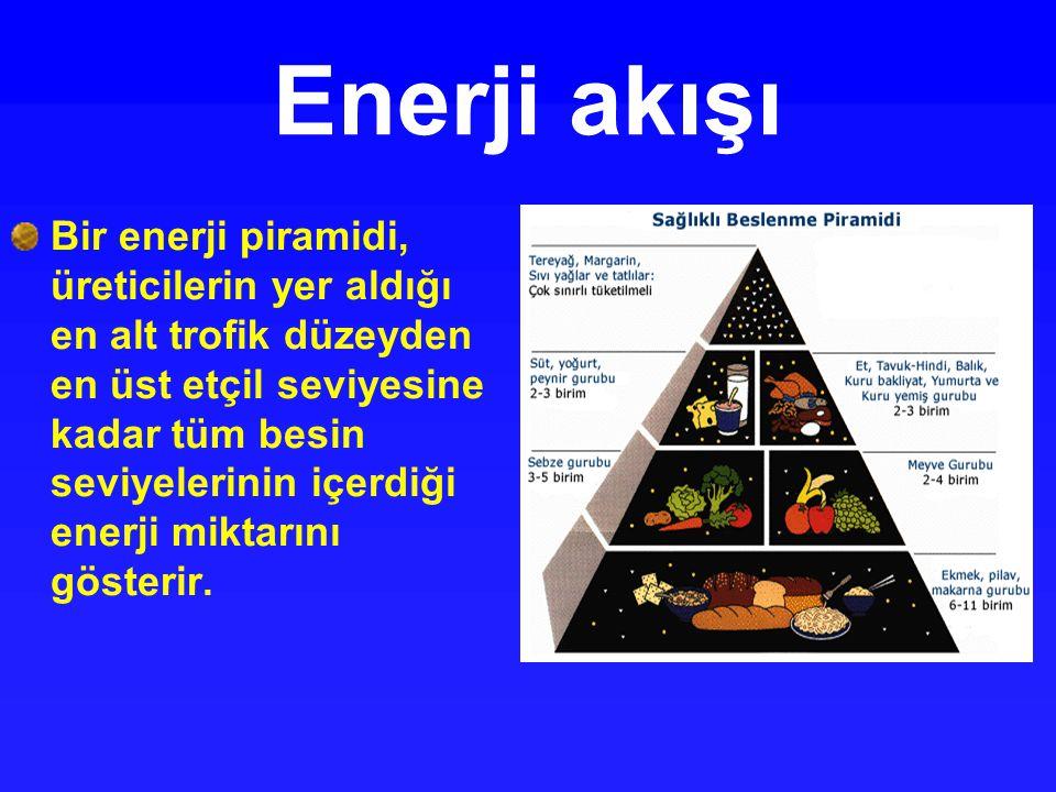 Enerji akışı Bir enerji piramidi, üreticilerin yer aldığı en alt trofik düzeyden en üst etçil seviyesine kadar tüm besin seviyelerinin içerdiği enerji