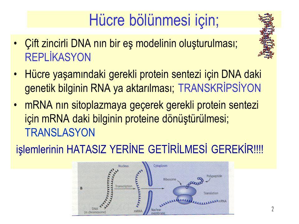 2 Hücre bölünmesi için; Çift zincirli DNA nın bir eş modelinin oluşturulması; REPLİKASYON Hücre yaşamındaki gerekli protein sentezi için DNA daki gene