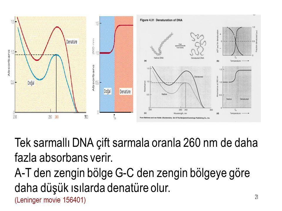 21 Tek sarmallı DNA çift sarmala oranla 260 nm de daha fazla absorbans verir. A-T den zengin bölge G-C den zengin bölgeye göre daha düşük ısılarda den