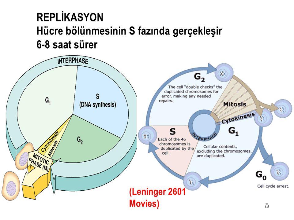 25 REPLİKASYON Hücre bölünmesinin S fazında gerçekleşir 6-8 saat sürer (Leninger 2601 Movies)