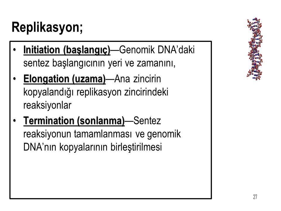 27 Initiation (başlangıç) Initiation (başlangıç) —Genomik DNA'daki sentez başlangıcının yeri ve zamanını, Elongation (uzama) Elongation (uzama) —Ana z