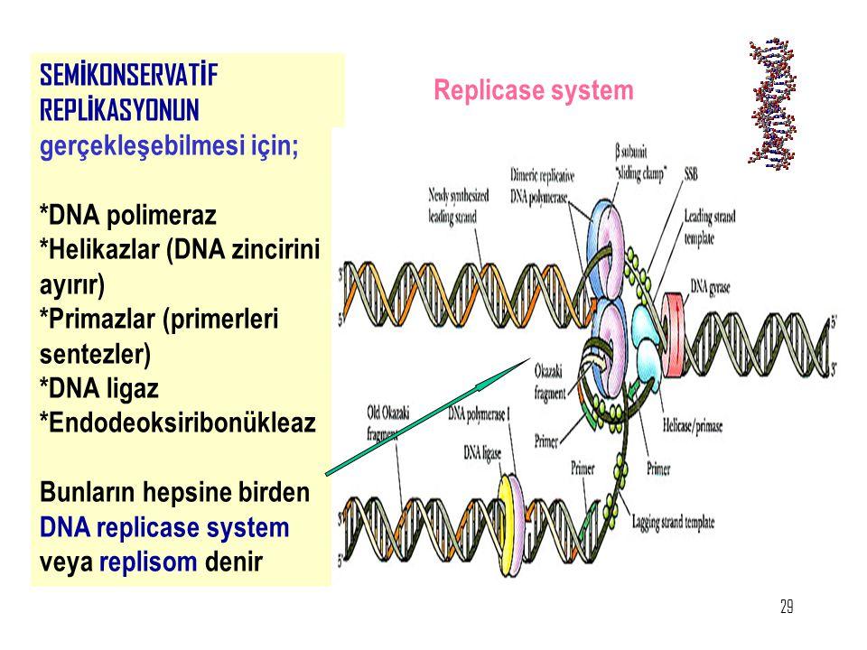 29 SEM İ KONSERVAT İ F REPL İ KASYONUN gerçekleşebilmesi için; *DNA polimeraz *Helikazlar (DNA zincirini ayırır) *Primazlar (primerleri sentezler) *DN