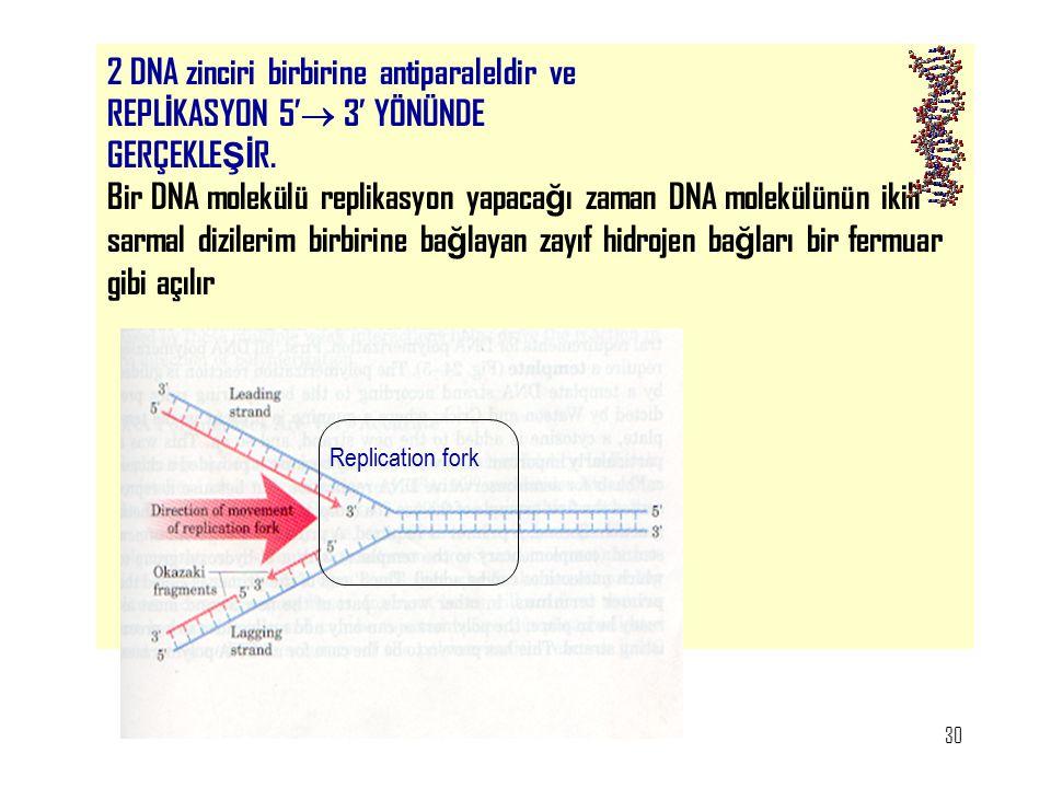 30 2 DNA zinciri birbirine antiparaleldir ve REPL İ KASYON 5'  3' YÖNÜNDE GERÇEKLE Şİ R. Bir DNA molekülü replikasyon yapaca ğ ı zaman DNA molekülünü