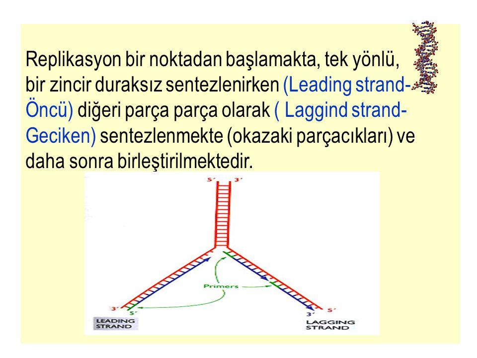 32 Replikasyon bir noktadan başlamakta, tek yönlü, bir zincir duraksız sentezlenirken (Leading strand- Öncü) diğeri parça parça olarak ( Laggind stran