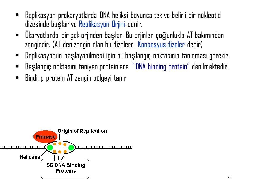 33 Replikasyon prokaryotlarda DNA heliksi boyunca tek ve belirli bir nükleotid dizesinde ba ş lar ve Replikasyon Orjini denir. Ökaryotlarda bir çok or