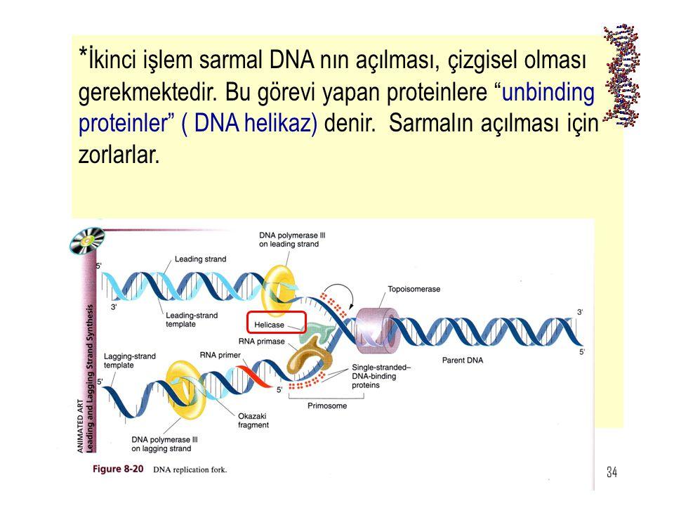 """34 * İkinci işlem sarmal DNA nın açılması, çizgisel olması gerekmektedir. Bu görevi yapan proteinlere """"unbinding proteinler"""" ( DNA helikaz) denir. Sar"""