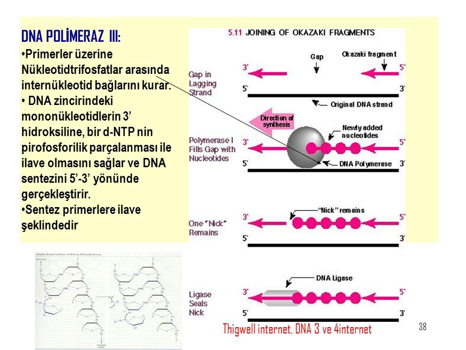 38 DNA POL İ MERAZ III: Primerler üzerine Nükleotidtrifosfatlar arasında internükleotid bağlarını kurar. DNA zincirindeki mononükleotidlerin 3' hidrok