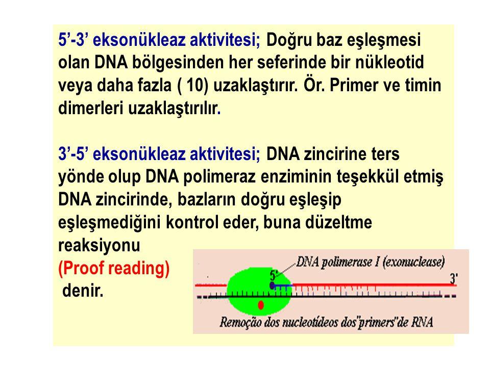 40 5'-3' eksonükleaz aktivitesi; Doğru baz eşleşmesi olan DNA bölgesinden her seferinde bir nükleotid veya daha fazla ( 10) uzaklaştırır. Ör. Primer v