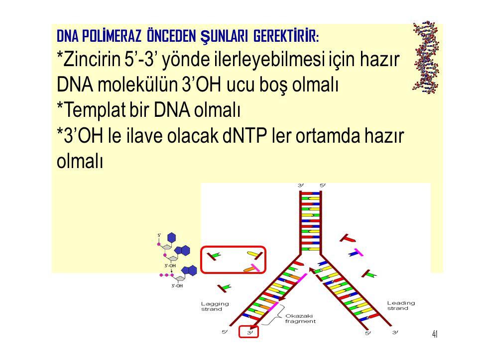41 DNA POL İ MERAZ ÖNCEDEN Ş UNLARI GEREKT İ R İ R: *Zincirin 5'-3' yönde ilerleyebilmesi için hazır DNA molekülün 3'OH ucu boş olmalı *Templat bir DN