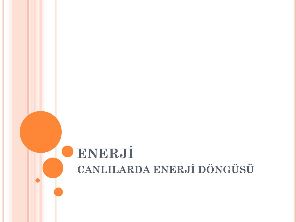 ENERJİ CANLILARDA ENERJİ DÖNGÜSÜ