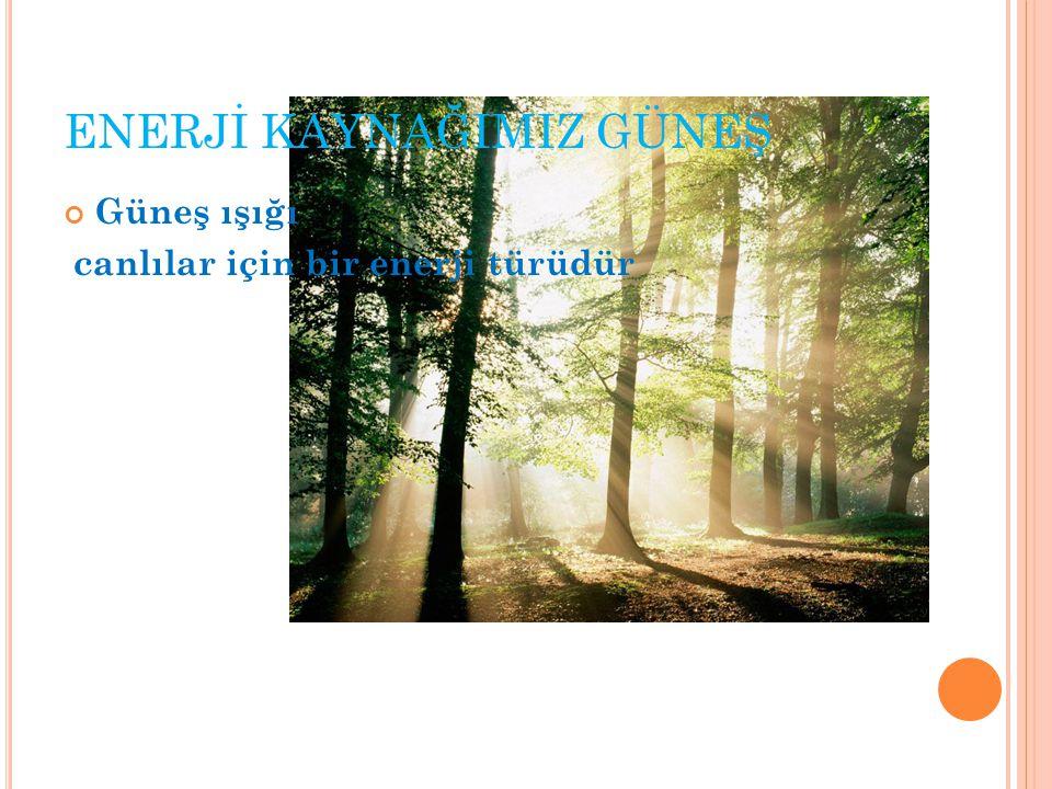 ENERJİ KAYNAĞIMIZ GÜNEŞ Güneş ışığı canlılar için bir enerji türüdür