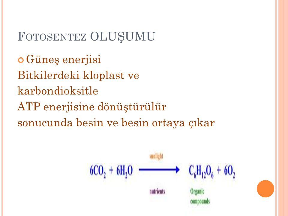 F OTOSENTEZ OLUŞUMU Güneş enerjisi Bitkilerdeki kloplast ve karbondioksitle ATP enerjisine dönüştürülür sonucunda besin ve besin ortaya çıkar