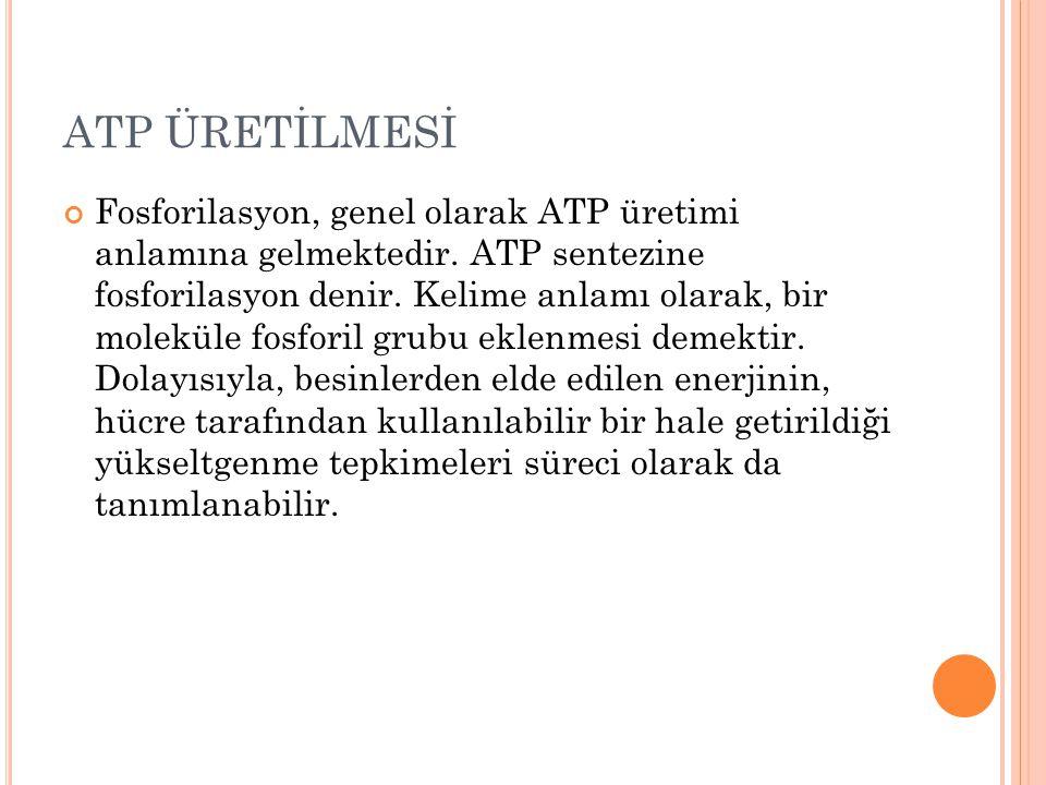 ATP ÜRETİLMESİ Fosforilasyon, genel olarak ATP üretimi anlamına gelmektedir. ATP sentezine fosforilasyon denir. Kelime anlamı olarak, bir moleküle fos