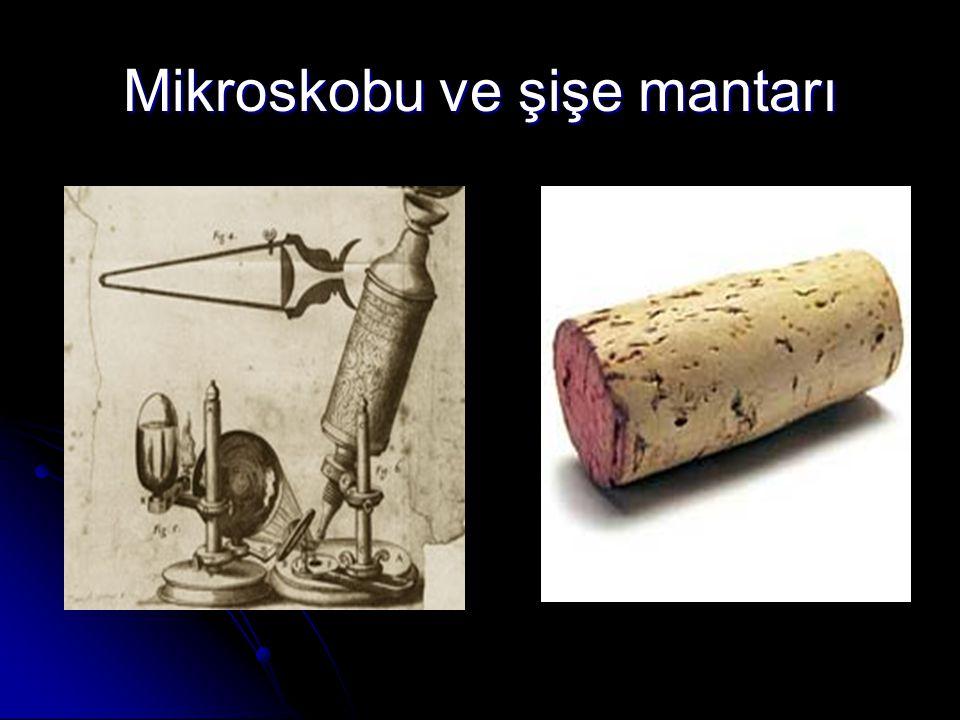 Mikroskobu ve şişe mantarı