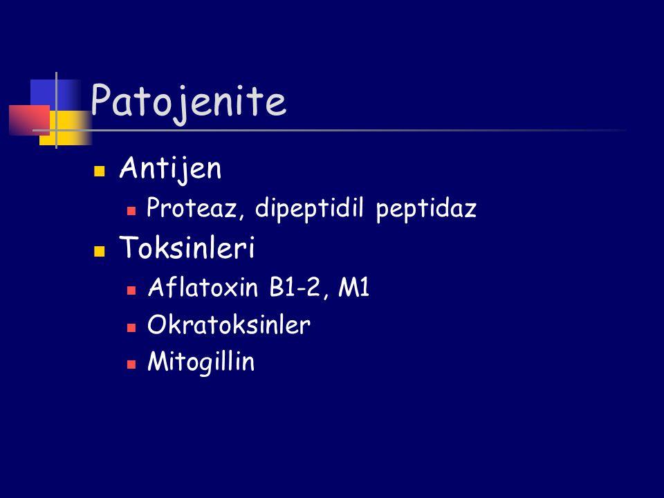 Patojenite Antijen Proteaz, dipeptidil peptidaz Toksinleri Aflatoxin B1-2, M1 Okratoksinler Mitogillin