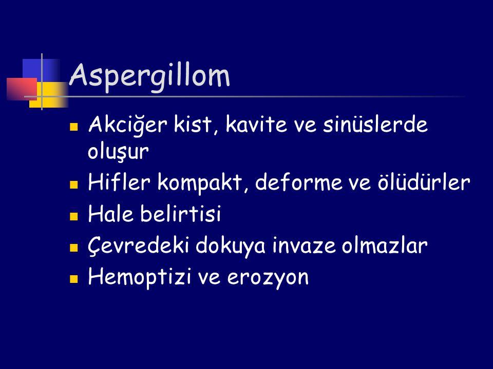 Aspergillom Akciğer kist, kavite ve sinüslerde oluşur Hifler kompakt, deforme ve ölüdürler Hale belirtisi Çevredeki dokuya invaze olmazlar Hemoptizi v