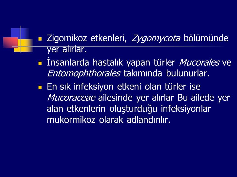 Zigomikoz etkenleri, Zygomycota bölümünde yer alırlar. İnsanlarda hastalık yapan türler Mucorales ve Entomophthorales takımında bulunurlar. En sık inf