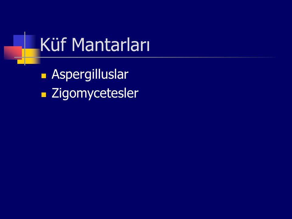 Küf Mantarları Aspergilluslar Zigomycetesler