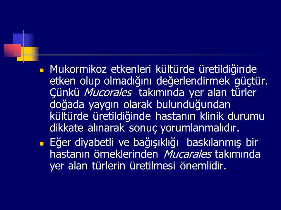 Mukormikoz etkenleri kültürde üretildiğinde etken olup olmadığını değerlendirmek güçtür. Çünkü Mucorales takımında yer alan türler doğada yaygın olara