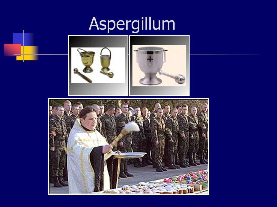 Aspergillom Akciğer kist, kavite ve sinüslerde oluşur Hifler kompakt, deforme ve ölüdürler Hale belirtisi Çevredeki dokuya invaze olmazlar Hemoptizi ve erozyon