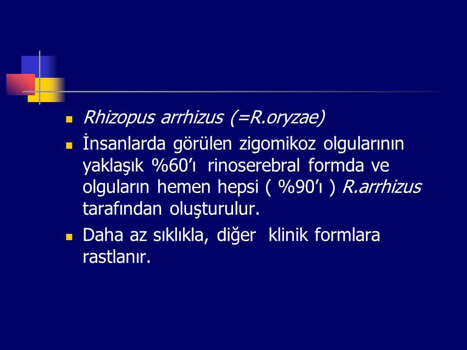 Rhizopus arrhizus (=R.oryzae) İnsanlarda görülen zigomikoz olgularının yaklaşık %60'ı rinoserebral formda ve olguların hemen hepsi ( %90'ı ) R.arrhizu