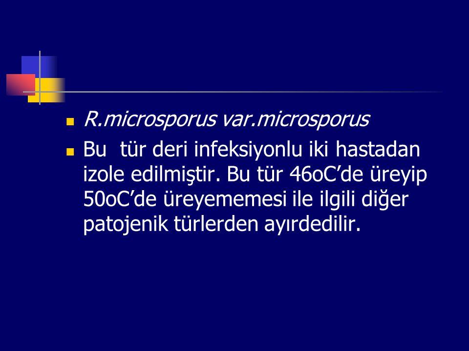 R.microsporus var.microsporus Bu tür deri infeksiyonlu iki hastadan izole edilmiştir. Bu tür 46oC'de üreyip 50oC'de üreyememesi ile ilgili diğer patoj