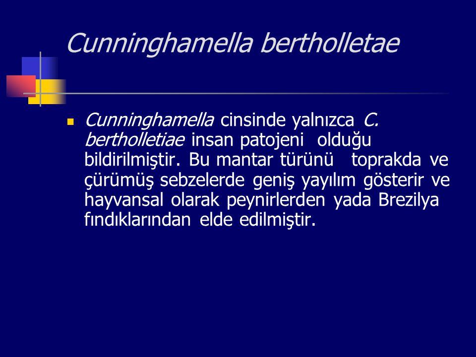 Cunninghamella bertholletae Cunninghamella cinsinde yalnızca C. bertholletiae insan patojeni olduğu bildirilmiştir. Bu mantar türünü toprakda ve çürüm
